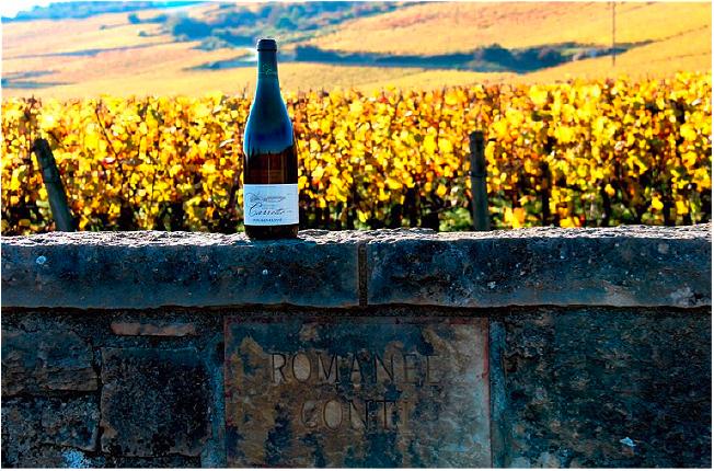 Concours photo vin Domaine Carrette
