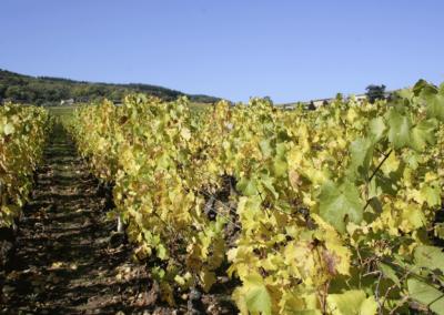 domaine_carrette_aligote_Bourgogne